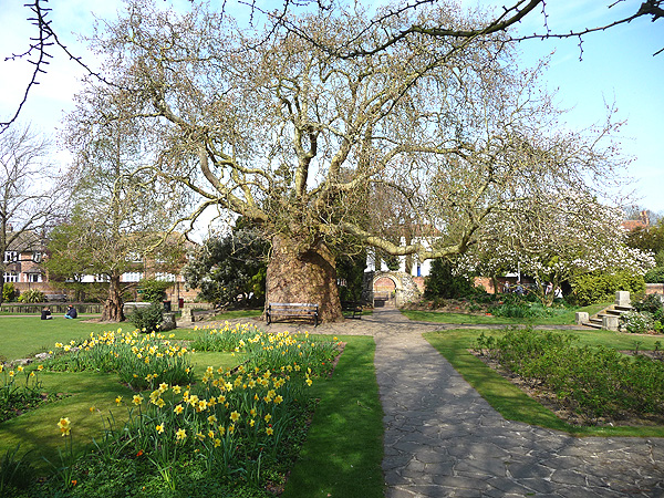 Canterbury in Spring
